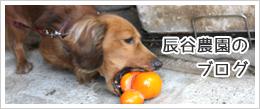 辰谷農園のブログ
